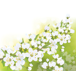 Vector spring blossoming tree  background.