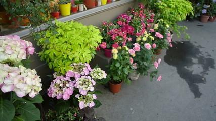 Flowers market boutique in Paris, France