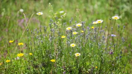 Wildflowers sway in the wind