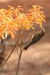 canvas print picture - little bird eats from a flower