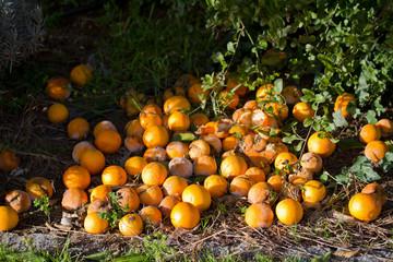 old oranges