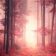 Red mystic color forest