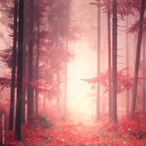 Red mystic color forest - 78396403