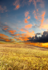 wheat field under a scenic sky