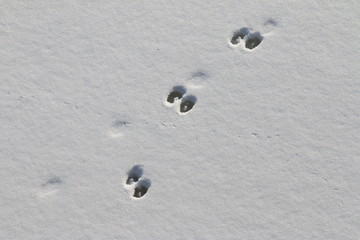 Animal track lines in the fresh snow