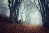 Fototapety Mysterious autumn forest in fog
