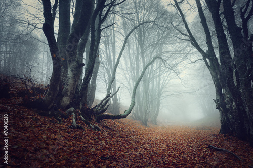 Tuinposter Oost Europa Mysterious autumn forest in fog