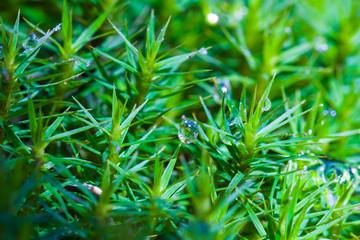 closeup green moss