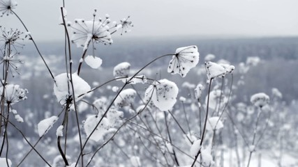 Winter Flowers In The Wind, Close Up
