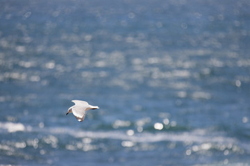 Gull flying over blue sea