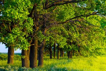 green oak grove
