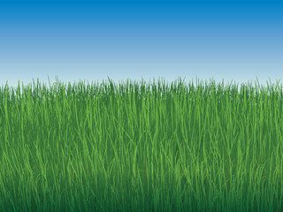 background of sky and boundless green grass