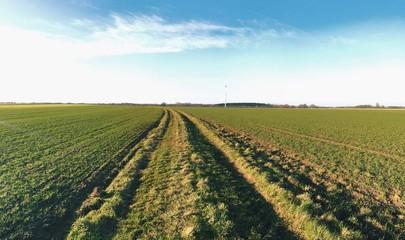 Kahle Felder im Winter
