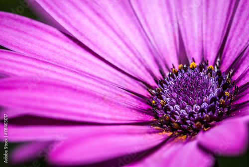 canvas print picture flower purple, magenta with details of pistils
