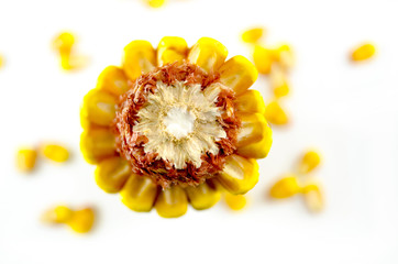 Corn cob taken from above, isolated