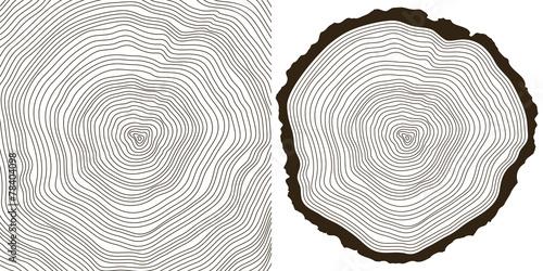 tree rings - 78404098