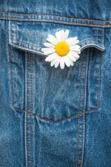 Blume im Knopfloch, Margerite, Jeans