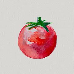 watercolor tomato