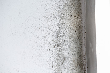 A dangerously mouldy white wall