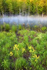 Morning Fog on a Pond
