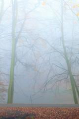 autumn park in misty hazy day