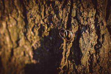 Свадебные кольца на дереве