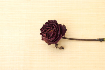single sear red rose on plywood background