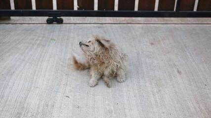 dog scratching it self