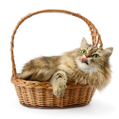 Beautiful cat in basket isolated on white