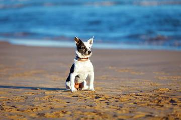 Training dog on the beach