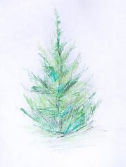 Pine, pencil drawing
