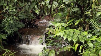 Stream flowing through cloudforest at 2,200m elevation, Ecuador