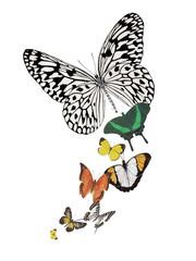 butterfly design