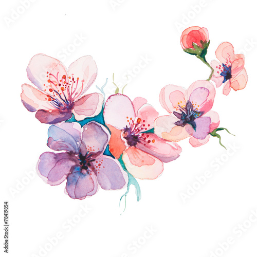 the spring flowers watercolors isolated on the white background - 78419854