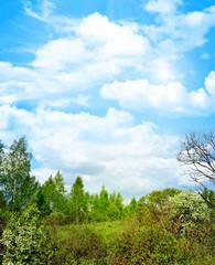 Spring landscape forest