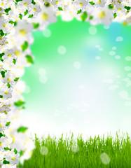 Frühlingswiese, Apfelblüten