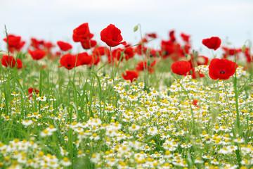 wild flowers meadow spring season
