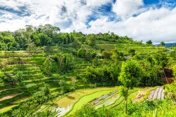 Bali island. Indonesia