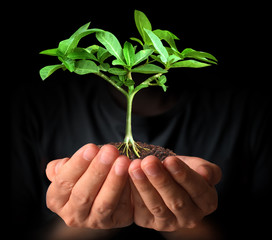 man hands holding plant