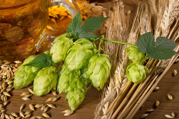 hop cones and raw material for beer production