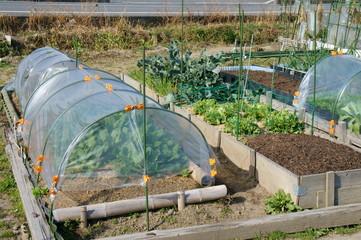 家庭菜園のトンネル栽培