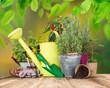 Obrazy na płótnie, fototapety, zdjęcia, fotoobrazy drukowane : Outdoor gardening tools and herbs