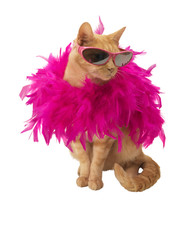 Ginger Cat with feather boa (no shadow)