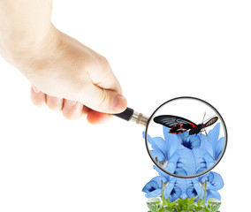hand with magnifying glass and butterfly on flowers violets