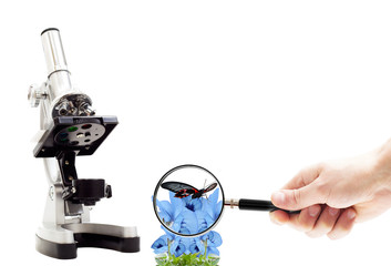 hand with magnifying glass, microscope and butterfly on flowers