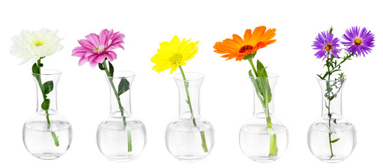 Collage of different flowers in glass test-tubes, isolated