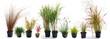 Leinwanddruck Bild - The most beautiful ornamental grass garden
