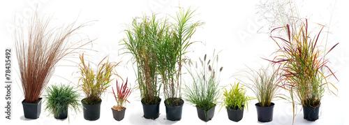 Leinwanddruck Bild The most beautiful ornamental grass garden