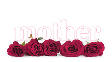 Mother's Day Roses on white background