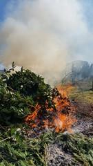 Bruciare le erbacce